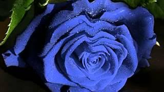 Nasze Róże