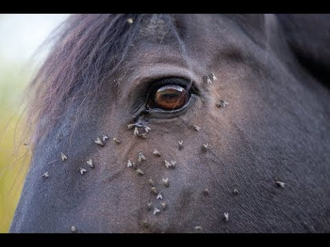 Ways to reduce fly worry that don't harm your horse
