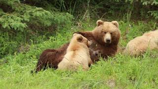 Bear Family Eats Lunch and Naps - Part 2
