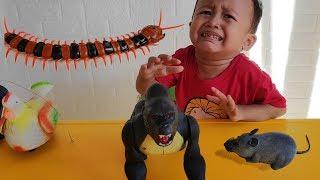 Mainan Gorilla, Tikus, Ayam Betina & Kelabang - Yahh Gavin Nangis Lagi...
