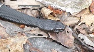 Жители Башкортостана жалуются на нашествие змей