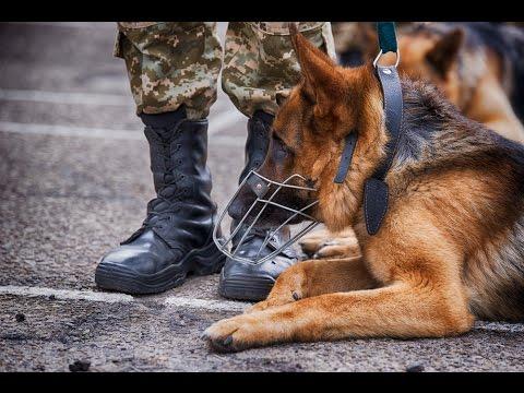 В Госпогранслужбе собаки приняли присягу на верность государству и хозяину