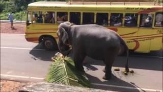 Казус со слоном. Забавные животные