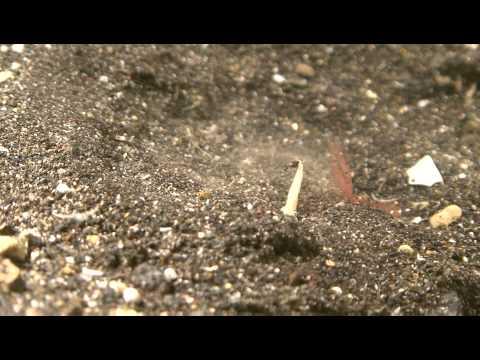 aszcariasis rendszer kezelése helminták Voronezh