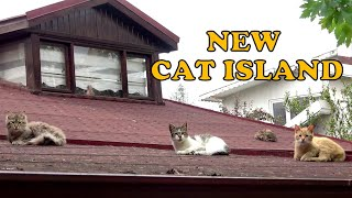 Feeding cats on new cat island with cat food and love
