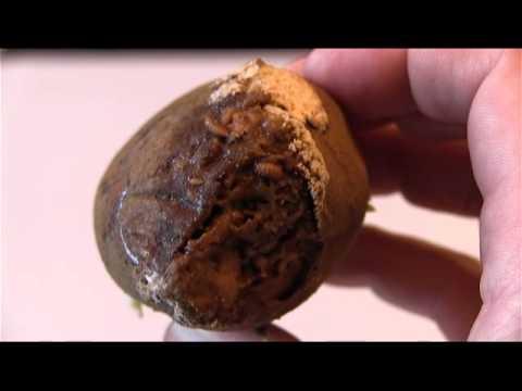 Tubig na walang mga parasito basahin