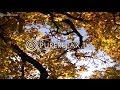 Relaxing Music - Orchestra Music, Instrumental & Classic Music - THE FOUR SEASONS