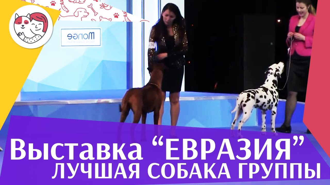 Лучшая собака 6 группы по классификации FCI 19 03 17 на Евразии ilikepet