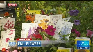 Garden Guy: Best Time to Plant Fall Flowers