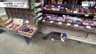 Vol.105「にゃん旅鉄道」大内宿でお散歩だにゃ~!