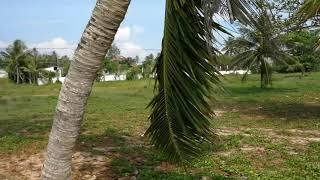 5.2 Rai of Beachfront Land For Sale at Natai with 80 meters of Beach Frontage