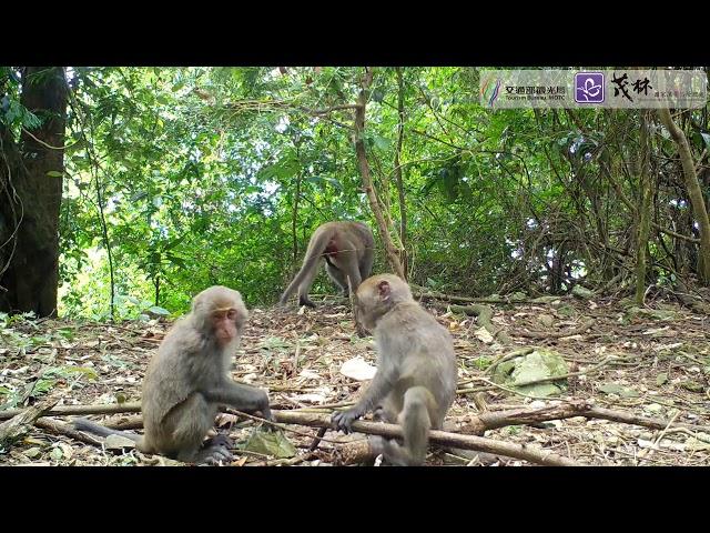 <html> <body> 茂林動物篇 ─ 台灣獼猴之二 </body> </html>
