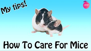 HOW TO CARE FOR MICE
