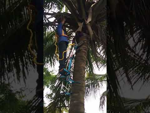 Vertical SS Rod Coconut Tree Climber
