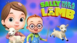 Sally Had a Little Lamb | Baby Ronnie Rhymes | Videogyan 3d Rhymes | Nursery Rhymes & Kids Songs