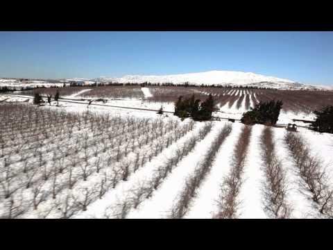 רמת הגולן בחורף - סרטון טבע מקסים!