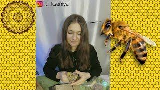 Обзор оригинальной косметики из пчелиного воска