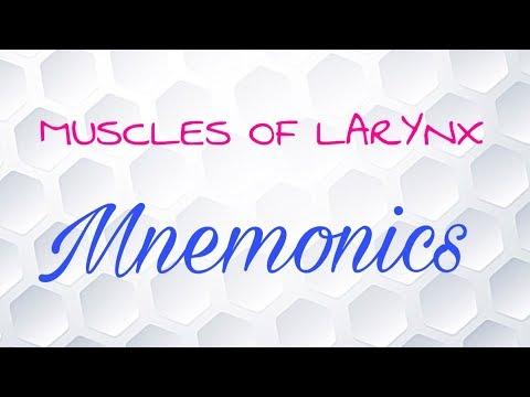 Lensemble des exercices pour le renforcement des muscles du dos pour lécolier
