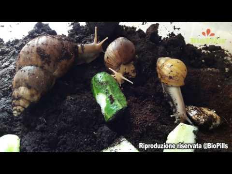 Farmaci per vermi per bambini e gli adulti Belarus
