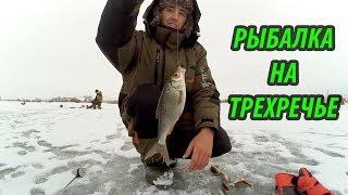 Река проня тульская область рыбалка
