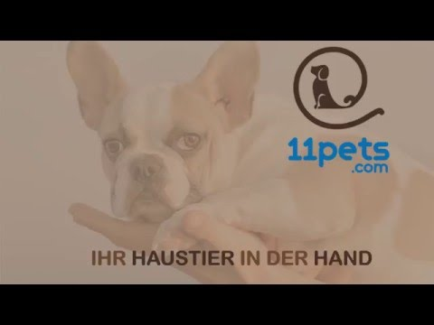 11Pets: Haustiere Pflege