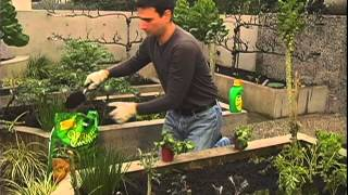 How to Start Your Own Vegetable Garden From Canadian Tire
