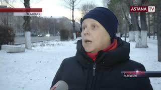 В Павлодаре планируют вырубить 6 тысяч деревьев для строительства гребного канала
