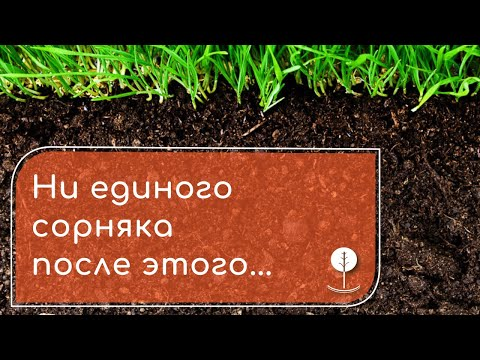 Как уничтожить сорняки? - НАПАЛМ ЗНАЕТ!