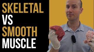 Skeletal Muscle vs Smooth Muscle