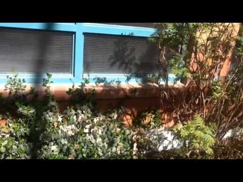 Esker Lake Public School Happy Gardens Project