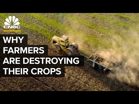 , title : 'Why Farmers Are Destroying Millions Of Pounds Of Food