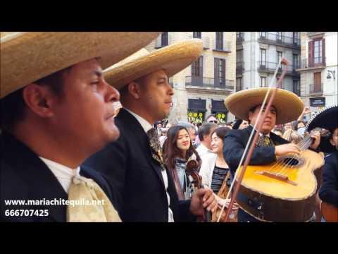Mariachi Tequila