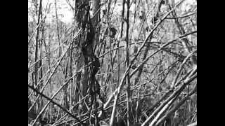 Video Orły w błocie Europy_MIGAWKI