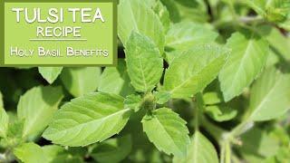 Tulsi Tea Recipe and Holy Basil Benefits