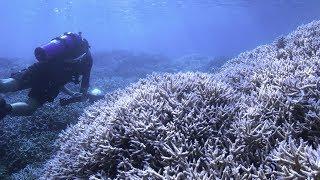 追逐珊瑚,Chasing Coral,電影預告中文字幕