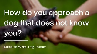 How do you approach a dog that doesn't know you?   wikiHow Asks a Professional Dog Trainer