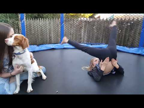 Teach your Dog to Jump on the Trampoline ( Part 2 )
