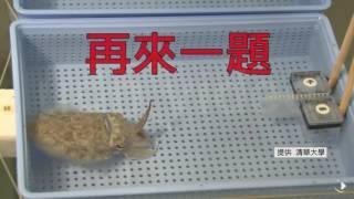 2016.09.08清大研究發現烏賊會算數