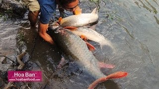 Giant Fish Catch At Black River