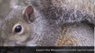 preview picture of video 'Squirrel control Poughkeepsie 12601 NY pest control Eastern Pest Management'