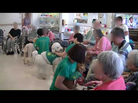 "Stray Dogs become ""Therapy Dogs"""