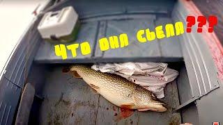 Рыбалка  осень 2019 / день второй / щука / крокодилы существуют /