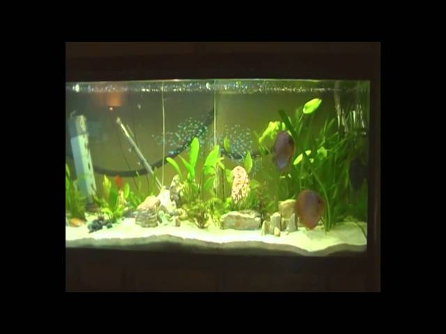 26 discus and 450 Cardinal Tetra and some other fishes in 720 liter tank Donmink