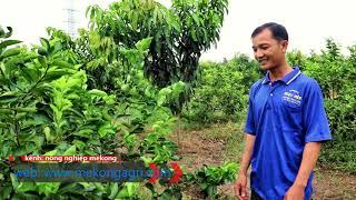 Phỏng vấn nông dân Tấn Hưng (Châu Thành, Hậu Giang) sau thời gian sử dụng hệ thống tưới tự động.