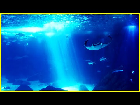 Sono Profundo -Relaxar -Fundo do mar -Meditao -Musica Relajante Meditation sound -Natureza - sv129