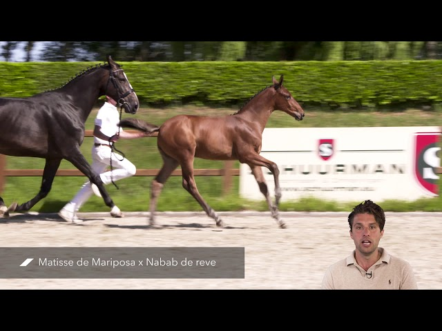 Masarati RV Z (Matisse de Mariposa x Nabab de Reve)