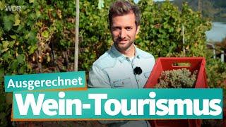 Mosel Und Ahr: Ausgerechnet Wein   WDR Reisen