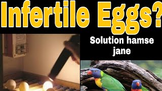 Problem Of Infertility In Exotic Birds, And There Solutions