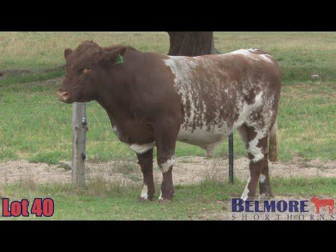 BELMORE QUINN Q241
