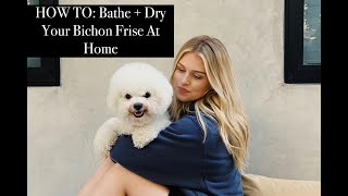 HOW TO: BATHE + DRY YOUR BICHON FRISE AT HOME... CHEAP & EASY